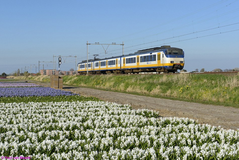 SGMm Sprinter 2939 tussen de hyacinten even ten zuiden van Hillegom op 8 april 2017. Foto: Paul van Baarle.